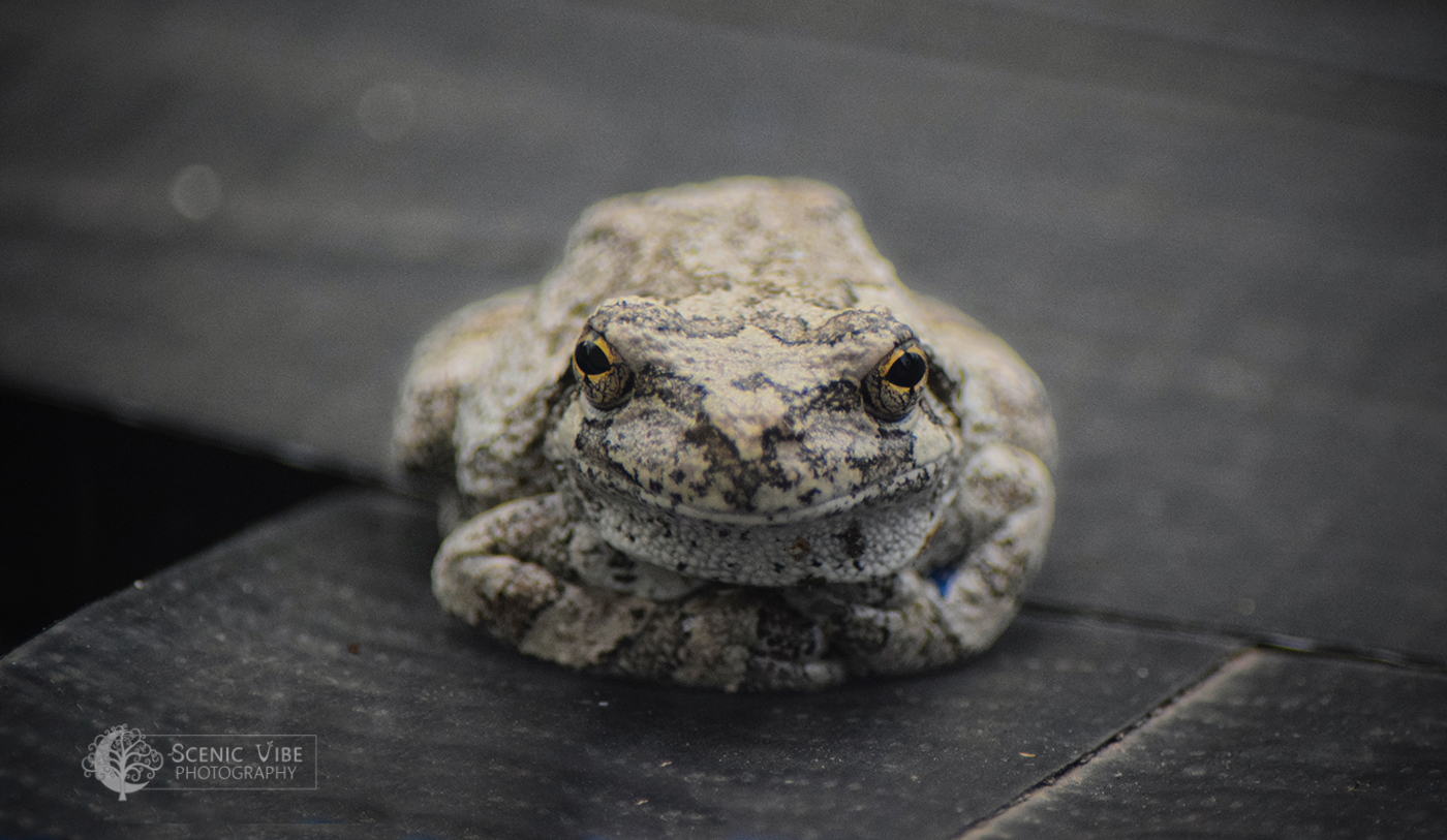 Greeter Frog